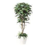 508A450-16 [インテリアグリーン 人工観葉植物 光触媒 フィカスベンジャミン植栽付 1.8m]