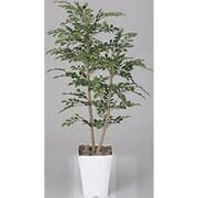 184B200-30 [インテリアグリーン 人工観葉植物 光触媒 トネリコ 1.2m]
