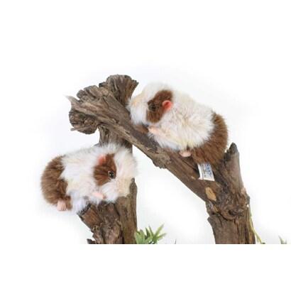 テンジクネズミの画像 p1_32