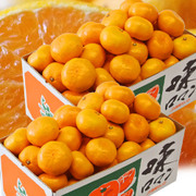 長崎県産 味ロマン (みかん) 約2.5kg (2S~M) ×2箱