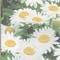 春まき野菜・花の「種」が続々入荷中!