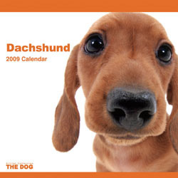 2009 カレンダー THE DOG ダックスフンド