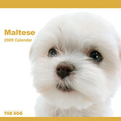 2009 カレンダー THE DOG マルチーズ