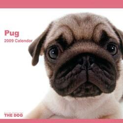 2009 カレンダー THE DOG パグ