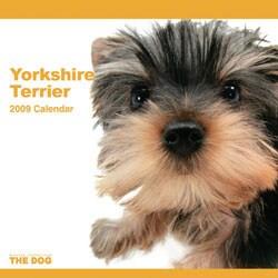 2009 カレンダー THE DOG ヨークシャテリア