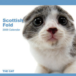 2009 カレンダー THE CAT スコティッシュ・フォールド