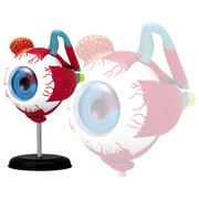 眼球解剖モデル [立体パズル No.2]