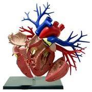 DX心臓解剖モデル [人体解剖モデル]