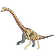 立体パズル 4D 動物解剖 No.24 ブラキオサウルス 解剖モデル