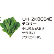 UH-ZKBC04E [Green Farm用 水耕栽培種子キット チコリー]