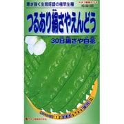KS100シリーズ(野菜) No.505 つるあり絹さやえんどう 30日絹さや白花