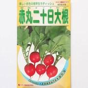 KS100シリーズ(野菜) No.519 赤丸二十日大根