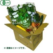 有機農法で作った野菜セット(小松菜、ルッコラなど旬の野菜) [茨城県産 有機野菜3,480円セット]