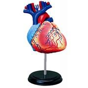 立体パズル 4D VISION 人体解剖 No.10 [心臓解剖モデル]