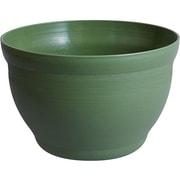 S-5592 [メダカの小鉢 とくさ]
