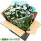 有機農法で作った野菜セット(小松菜、ルッコラ、ほうれん草など旬の野菜) [茨城県産 有機野菜1,980円セット]