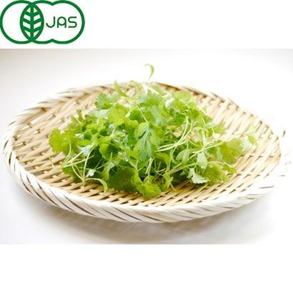 有機農法で作ったパクチーと旬の野菜の詰め合わせ(0.8kg) [茨城県産 有機パクチー2,980円セット]