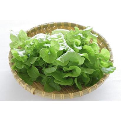 有機農法で作ったリーフレタスの詰め合わせ(3.8kg) 5回分回数券 [茨城県産 有機リーフレタス3,980円セット]