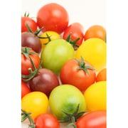 有機農法で作ったミニトマトの詰め合わせ(2.1kg) 5回分回数券 [茨城県産 有機ミニトマト2,980円セット]