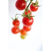 有機農法で作ったマイクロトマトの詰め合わせ(1.1kg) 5回分回数券 [茨城県産 有機マイクロトマト2,980円セット]