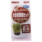 うさちゃん用 大麦若葉栽培セット 6回分 [小動物用フード・おやつ]