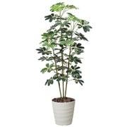 355A200-22 [インテリアグリーン 人工観葉植物 光触媒 カポック斑入り 1.5m]