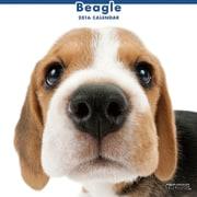 THE DOG カレンダー2016 ビーグル [2016年カレンダー 壁掛けタイプ]