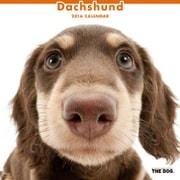 THE DOG カレンダー2016 ダックスフンド [2016年カレンダー 壁掛けタイプ]