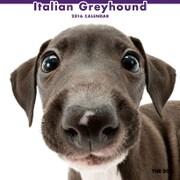 THE DOG カレンダー2016 イタリアングレイハウンド [2016年カレンダー 壁掛けタイプ]