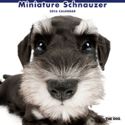 THE DOG カレンダー2016 ミニチュアシュナウザー [2016年カレンダー 壁掛けタイプ]