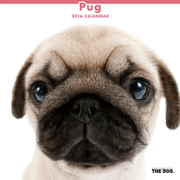 THE DOG カレンダー2016 パグ [2016年カレンダー 壁掛けタイプ]