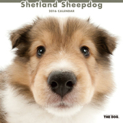 THE DOG カレンダー2016 シェットランドシープドッグ [2016年カレンダー 壁掛けタイプ]