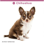 THE DOG ミニカレンダー2016 チワワ [2016年カレンダー 壁掛けタイプ]