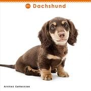 THE DOG ミニカレンダー2016 ダックスフンド [2016年カレンダー 壁掛けタイプ]
