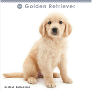 THE DOG ミニカレンダー2016 ゴールデンレトリーバー [2016年カレンダー 壁掛けタイプ]