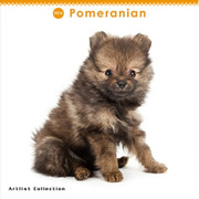 THE DOG ミニカレンダー2016 ポメラニアン [2016年カレンダー 壁掛けタイプ]