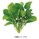 UH-BC02 [水耕栽培器 Green Farm用 種子 ルッコラ]