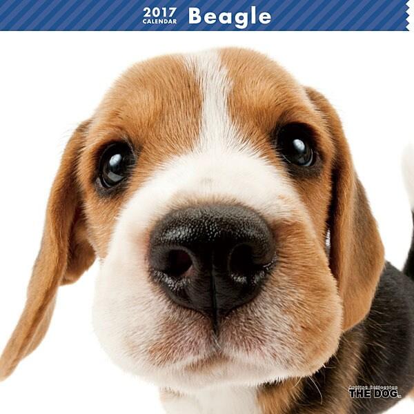 THE DOG カレンダー ビーグル [2017年カレンダー]