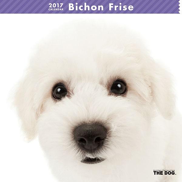 THE DOG カレンダー ビション フリーゼ [2017年カレンダー]
