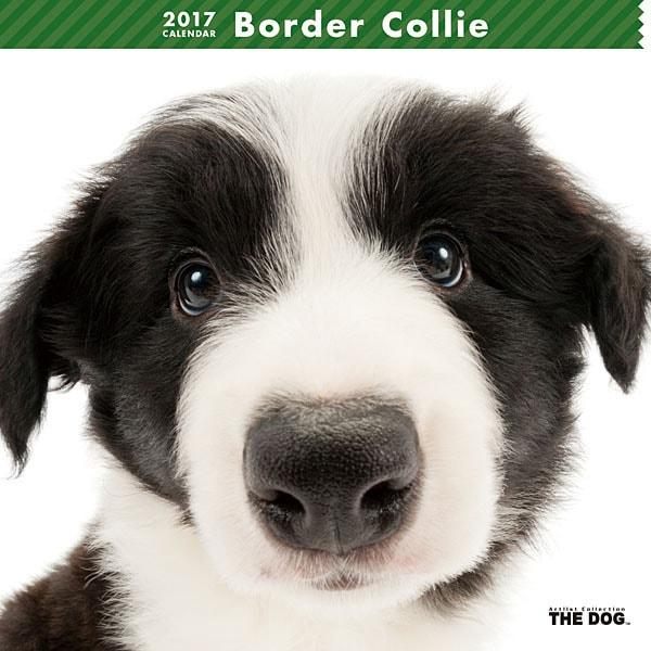 THE DOG カレンダー ボーダー コリー [2017年カレンダー]