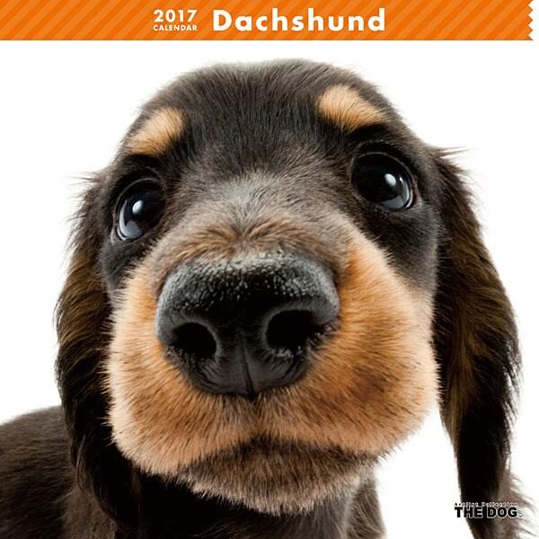 THE DOG カレンダー ダックスフンド [2017年カレンダー]