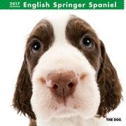 THE DOG カレンダー イングリッシュ スプリンガー スパニエル [2017年カレンダー]