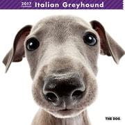 THE DOG カレンダー イタリアン グレイハウンド [2017年カレンダー]