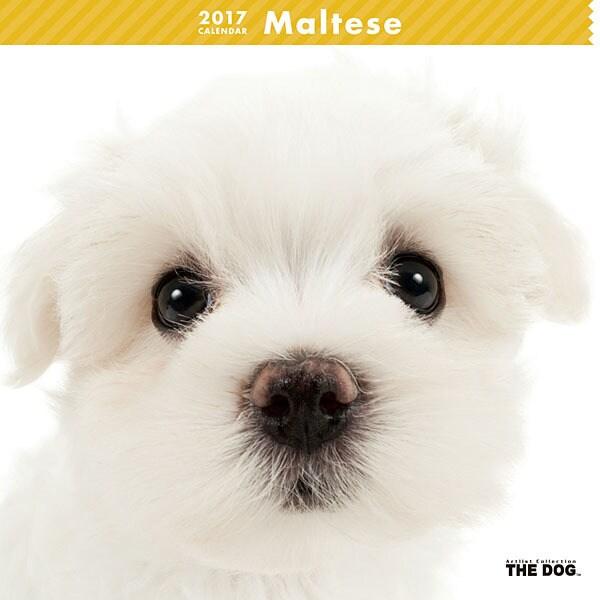 THE DOG カレンダー マルチーズ [2017年カレンダー]