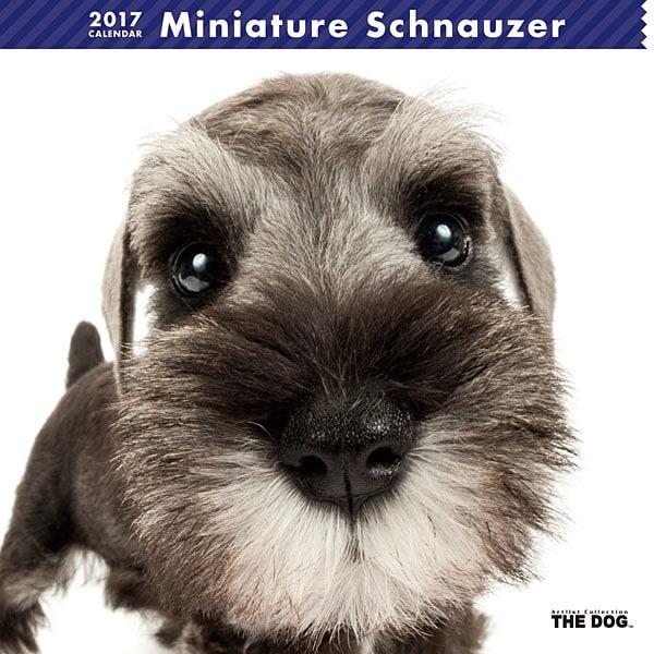 THE DOG カレンダー ミニチュア シュナウザー [2017年カレンダー]