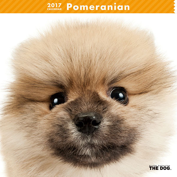 THE DOG カレンダー ポメラニアン [2017年カレンダー]