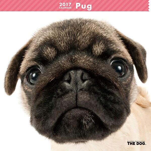 THE DOG カレンダー パグ [2017年カレンダー]