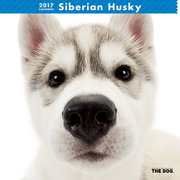THE DOG カレンダー シベリアン ハスキー [2017年カレンダー]