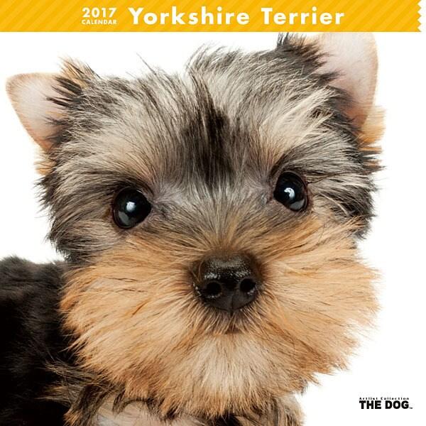 THE DOG カレンダー ヨークシャー テリア [2017年カレンダー]