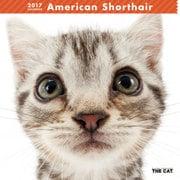 THE CAT カレンダー アメリカン ショートヘアー [2017年カレンダー]